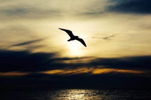 Nature Flight Wings Seabird Animal Seagull Bird