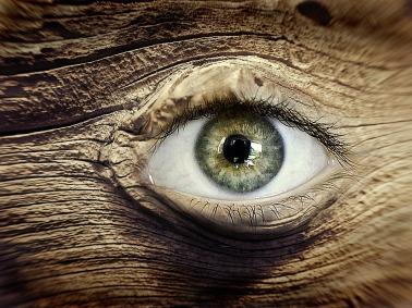 Holz1